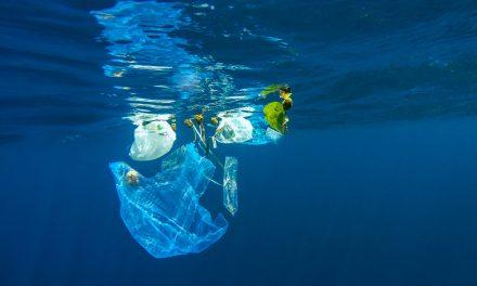 Les sacs biodégradables, une solution écologique ?